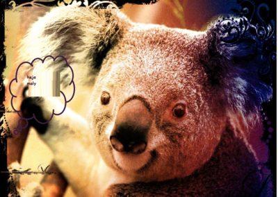 Koala moja